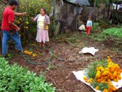 Pic 7: Harvesting Aztec marigolds at home for the Day of the Dead, Xico, Veracruz