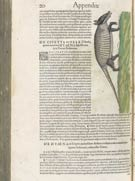 Pic 13: The armadillo - appendix page 20, 'Historiae animalium' by Swiss physician Conrad Gessner (1551–1558)