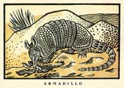 Pic 14: Line drawing of an armadillo by Gabriel Fernández Ledesma (1944)