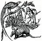 Pic 2: El método antiguo de cazar armadillos; ilustración de Heriberto García Rivas
