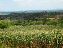 Pic 3: Una milpa nahua y bosque cerca de Chicontepec