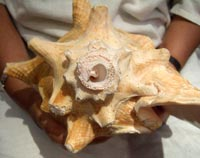 Picture 4: Look for this shell design on Ehécatl, the Aztec wind god...