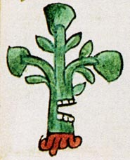 Pic 5: the glyph for the town of Ahuacatla(n), Codex Mendoza
