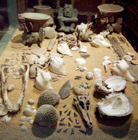 Pic 3: Shell instruments in amongst other offering artefacts, Templo Mayor Museum