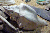 Part of a ritual offering, Templo Mayor Museum