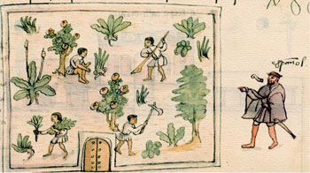 Pic 4: Labourers with their Uictin, Codex Osuna
