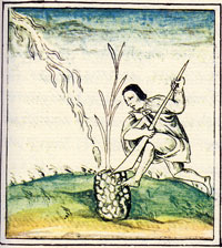Pic 6: A man tends to his crops with his Bladed Uictli, Florentine Codex Book XI
