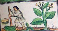 Pic 12: Farmer with Uictli, Florentine Codex