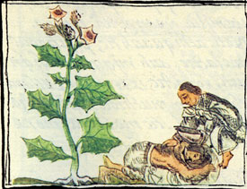 Using 'toloa', a 'fever medicine' to relieve gout, Florentine Codex, Book XI