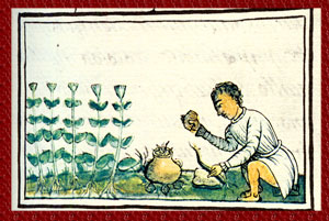'Maticeuac', a small herb 'required as a cure by one who has the nose-bleed', Florentine Codex Book XI