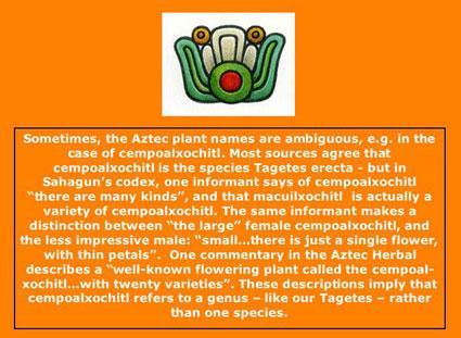 The Aztec Herbal Pharmacopoeia graphic