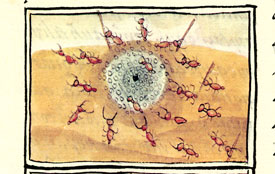 Ants' nest, Florentine Codex Book XI