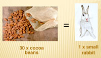 30 cocoa beans = 1 small rabbit