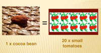 1 cocoa bean = 20 small tomatoes