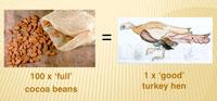 100 'full' cocoa beans = 1 'good' turkey hen