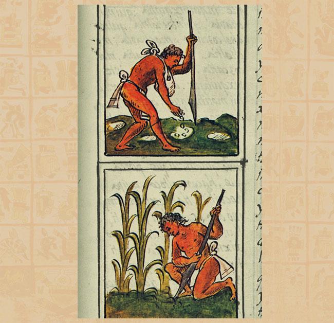 aztecs agriculture