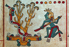 Pic 5: The digging stick represents a good citizen... Codex Fejérváry-Mayer, p. 29