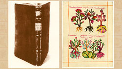 Picture 4: The Badianus Manuscript
