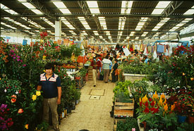 Picture 15: Mexican markets abound with plants, flowers, herbs - and medicines...