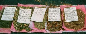 Picture 17: herbal remedies