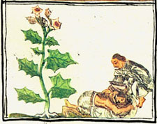 Pic 3: Applying a pain-killer, Aztec style (Florentine Codex, Book 11)