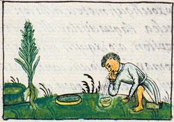 Imágen 8: Curando la fiebre: Códice Florentino Libro 11