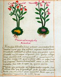 Imágen 9: Tratamiento azteca para el desmayo del corazón, Códice Badiano pl. 97