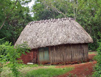 Pic 11: Traditional Maya pole-and-thatch house