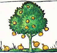 Pic 12: Chicozapote tree (Florentine Codex)