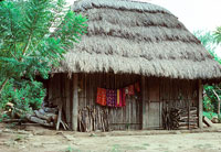 Pic 2: Contemporary Aztec thatch-roofed house.  Firewood for the cooking fire is stacked to the right and some of the family clothing is hanging against the house on the left.