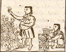 Pic 6: Aztec flower workers, Florentine Codex Book XI