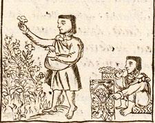 Pic 6: Aztec flower workers, Florentine Codex Book XI