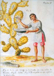 "From ""Indian Collecting Cochineal with a Deer Tail"" by José Antonio de Alzate y Ramírez (1777)"