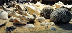 Pic 3: Los animales marinos fueron asociados con el inframundo en las ofrendas mexicas