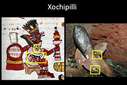 Pic 6: Attributes of Xochipilli found on one of the knives depicting him in Offering 125