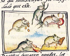 Pic 1: Mice: Florentine Codex, Book 11