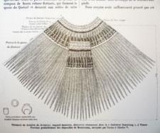 """Pic 10: Teobert Maler, """"Un Vêtement Royal de l'Ancien Méxique"""", in: La Nature, Septième année, premier semester, No. 300. Paris, 1879 : Masson."""