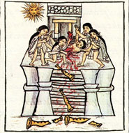 Pic 14: Sacrifice of a youth representing Tezcatlipoca for the feast of the 'month' of Toxcatl, Florentine Codex, Book 2, fol. 30r