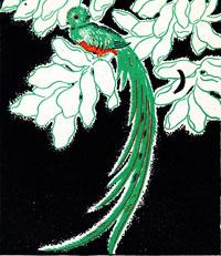 'A male quetzal'; illustration by Antonio Sotomayor