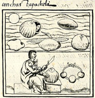 Pic 3: Seashells (top) and working the shells (bottom), Florentine Codex Book 11