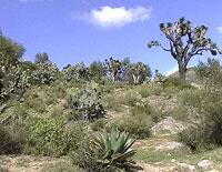 Pic 13: The landscape between Ixtacamaxtitlán and Tlaxcala