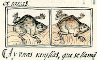 Pic 2: Toads, Florentine Codex Book XI
