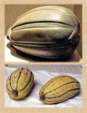 Pic 4: Squash: Aztec stone sculpture, and the real thing - not that easy to tell the difference, eh?!