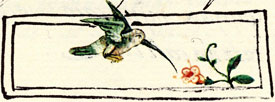 Pic 10: Hummingbird eating nectar. Florentine Codex, Book 11, Fig. 62