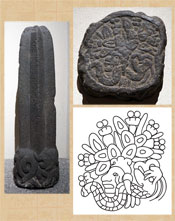 Pic 8: Stone cactus with an image of Tenoch on the underside, Museo Nacional de Antropologia, Mexico. Photograph of sculpture and of cast of its underside. Line drawing by David Recksieck, after Solís 2004: Figure 5