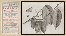 Pic 3: Title page of Sloane's work 'Voyage to Jamaica' (L); Sloane's line drawing of cacao, from this volume (R)