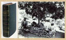 Pic 10: Volume 3 of 'Plants Gathered by Sir Hans Sloane in Jamaica' (L); cacao farmers in Jamaica in the 1900s (R)