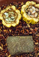 Pic 4: Theobrama Cacao fruit and crude chocolate tablet from Lowland Bolivia