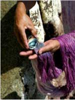 Pic 14: Dyeing with one of the last ancestral Purpura (murex) dyers on the planet on the coast of Oaxaca