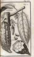Pic 9: Giovanni Francesco Gemelli Careri (1719) 'Voyage du tour du monde ...' Tome sixieme